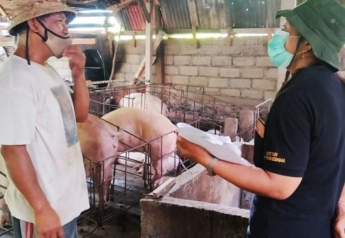Kementan dan Pemda Bali Awasi Pemotongan Babi untuk Galungan dan Kuningan